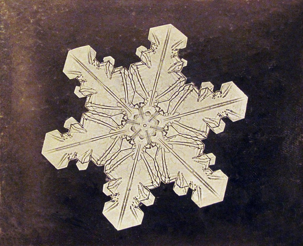 Detail of Study of a snowflake by Corbis