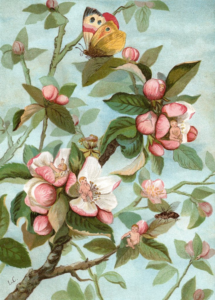 Detail of Fairies hiding in rose blossoms by Corbis