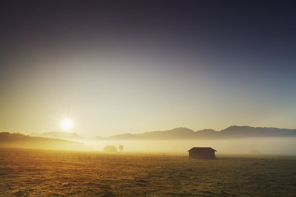 Detail of Countryside in mist in morning by Corbis