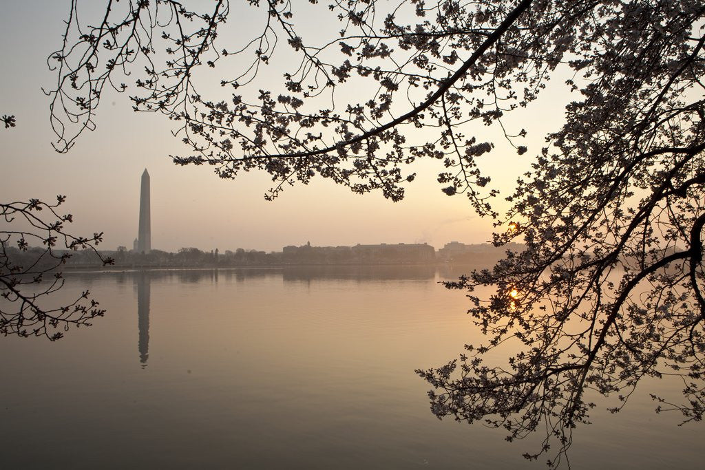 Detail of Sunrise over Tidal Basin by Corbis