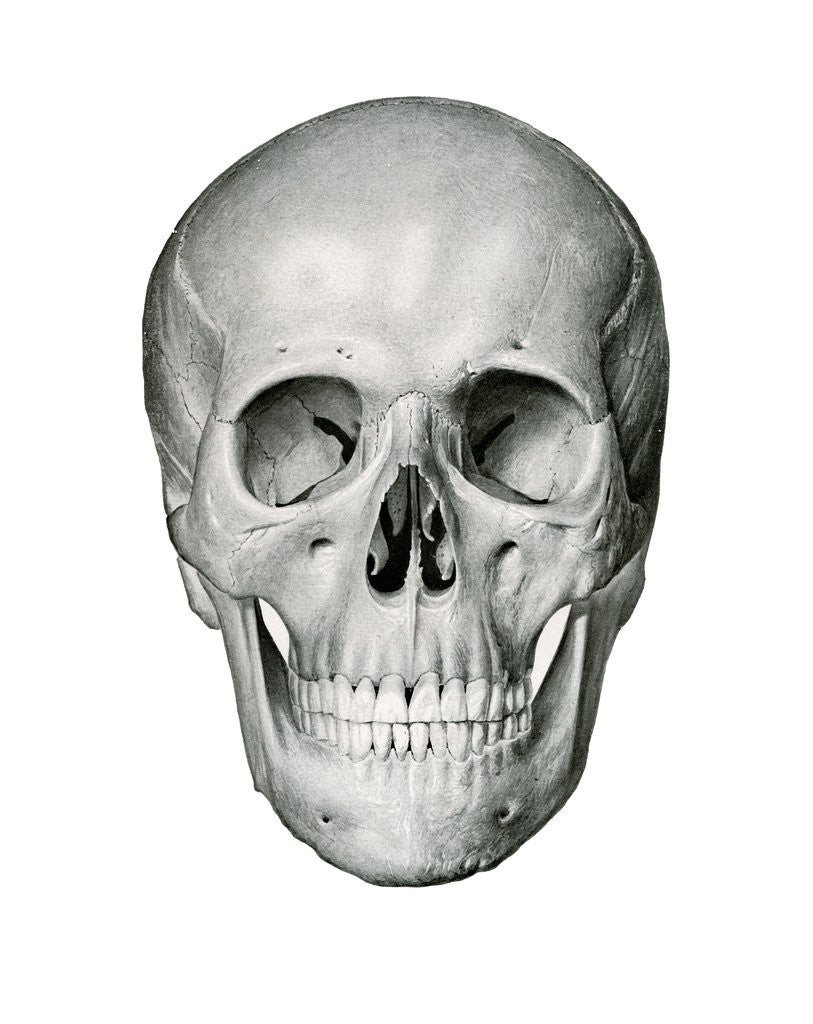 Detail of Anterior or Frontal View of Human Skull by Corbis