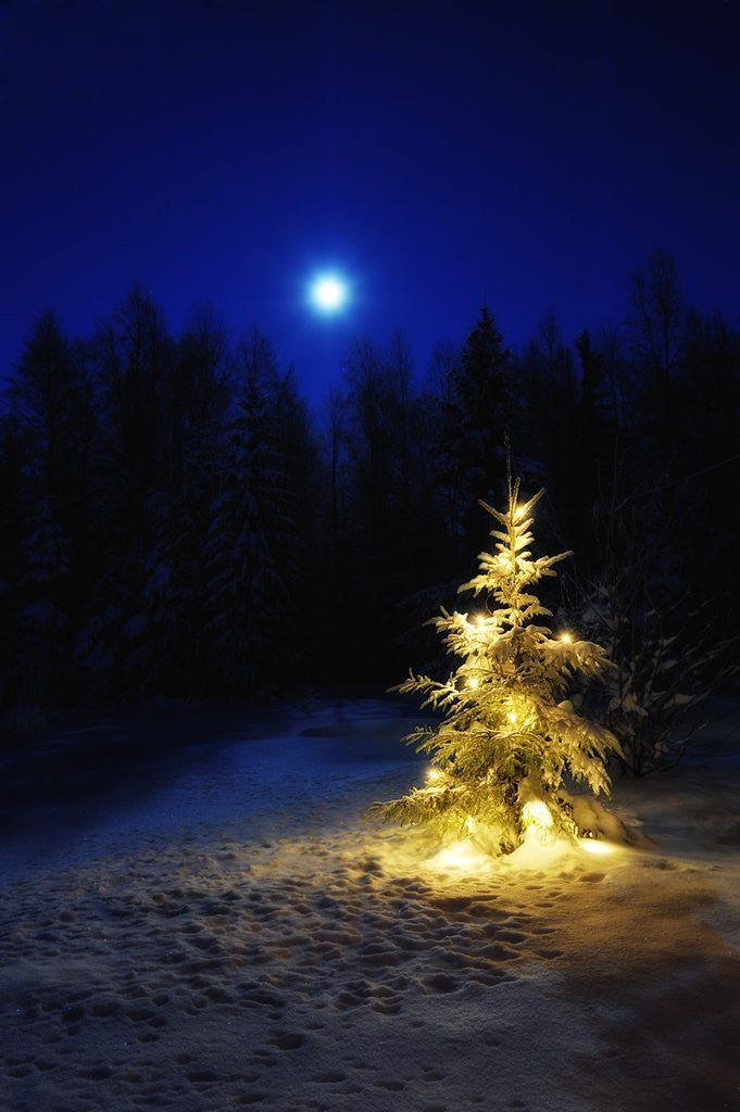 Detail of Small Christmas tree against silhouette trees and full moon by Corbis