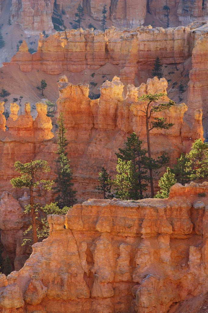 Detail of Eroded landscape in Bryce Canyon at Peekaboo Trail, USA, Utah, Bryce Canyon National Park by Corbis