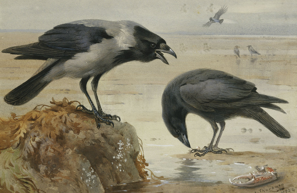Detail of A Hooded Crow and a Carrion Crow by Archibald Thorburn