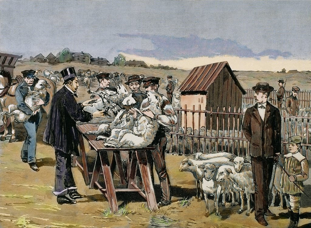 Detail of Pasteur, Louis (1822-1895). Vaccination of sheep against anthrax by Corbis