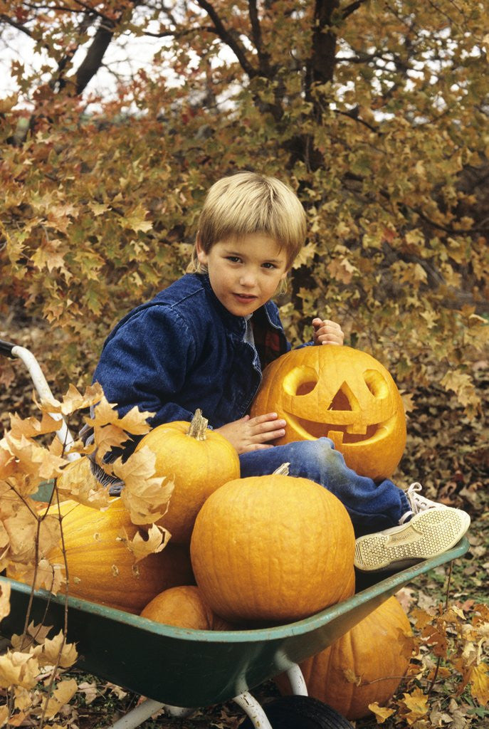 Detail of 1980s Boy Setting In Wheel Barrow With Halloween Pumpkins Looking At Camera by Corbis