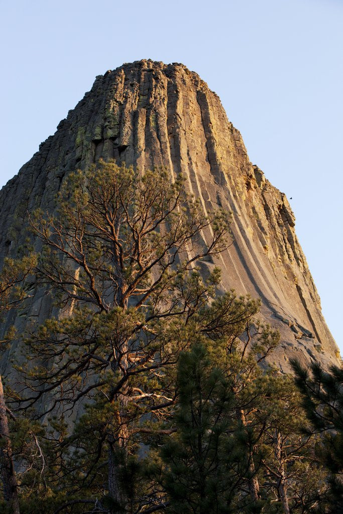 Detail of Devils Tower National Monument, Wyoming by Corbis