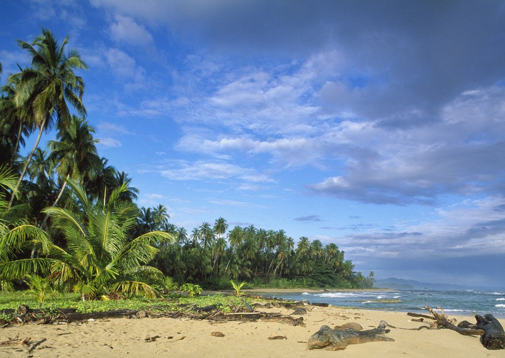 Detail of Beach in Limon, Costa Rica by Corbis