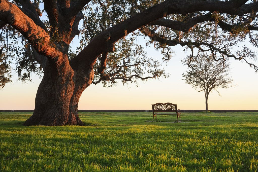 Detail of A grand oak tree overhangs a lone bench at sunset. by Corbis