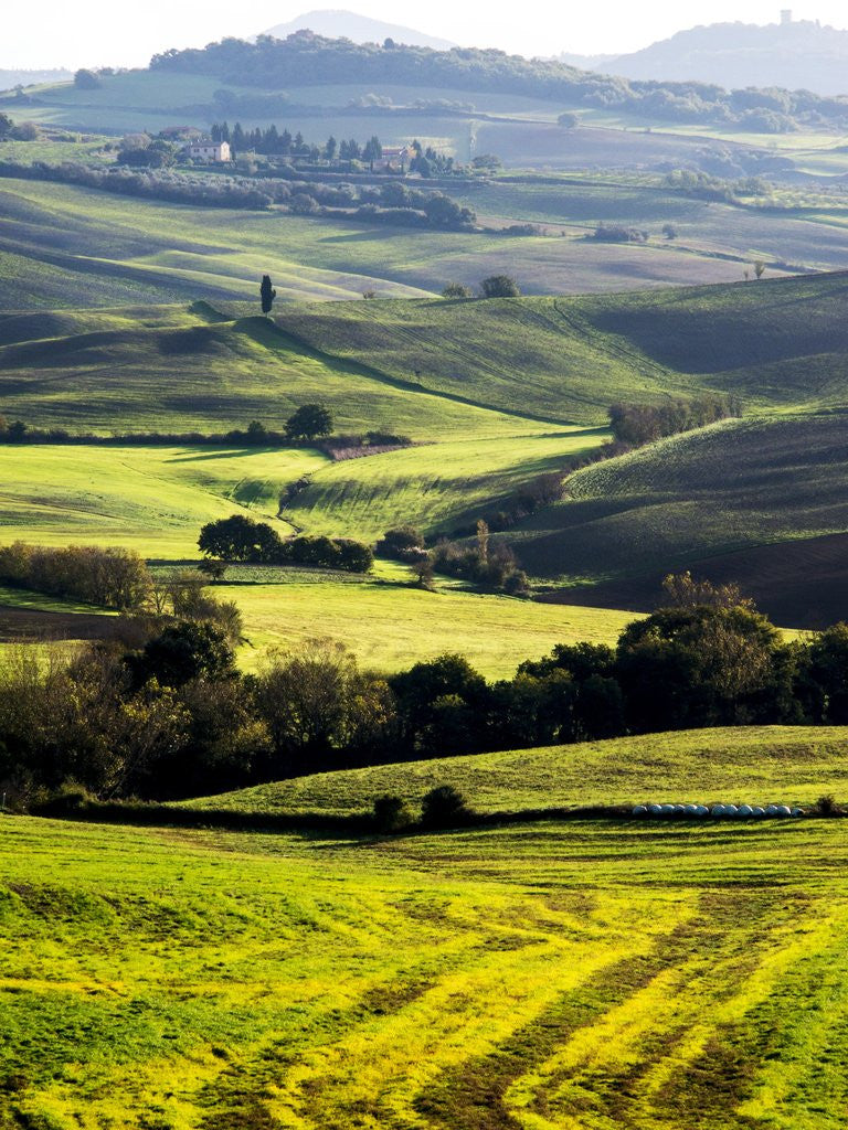 Detail of Morning light over the fields of Winter Wheat above the Tuscan Landscape by Corbis