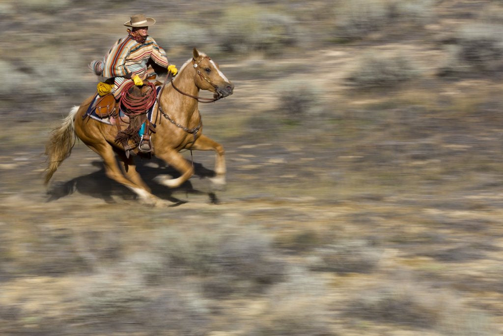 Detail of Cowgirl riding at full speed in motion by Corbis