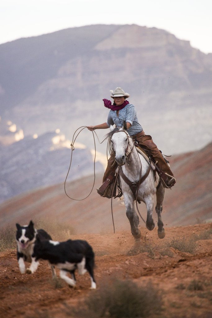 Detail of Cowgirl at Full Gallop with Cowdogs leading way by Corbis