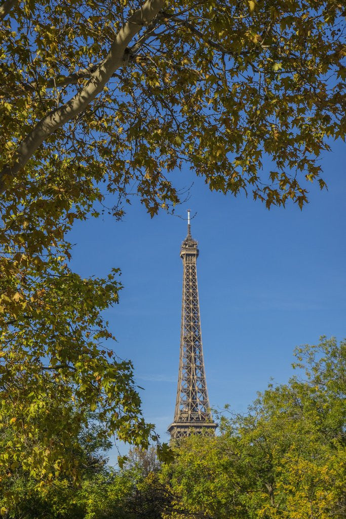 Detail of Eiffel Tower view from Champ de Mars by Corbis