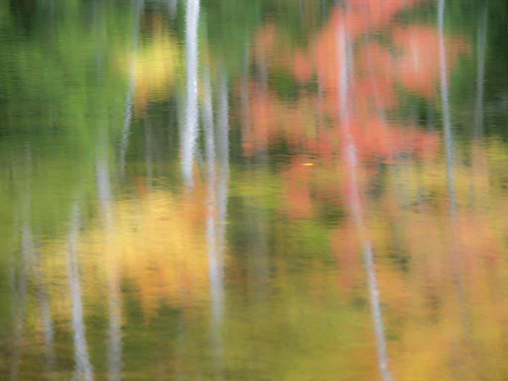 Detail of A reflection of a panned motion blur of autumn woodland. by Corbis