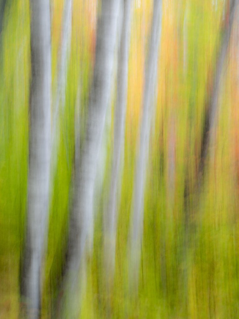 Detail of A panned motion blur of autumn woodland. by Corbis