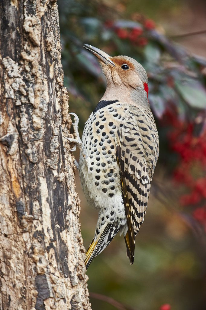 Detail of Flicker by Corbis