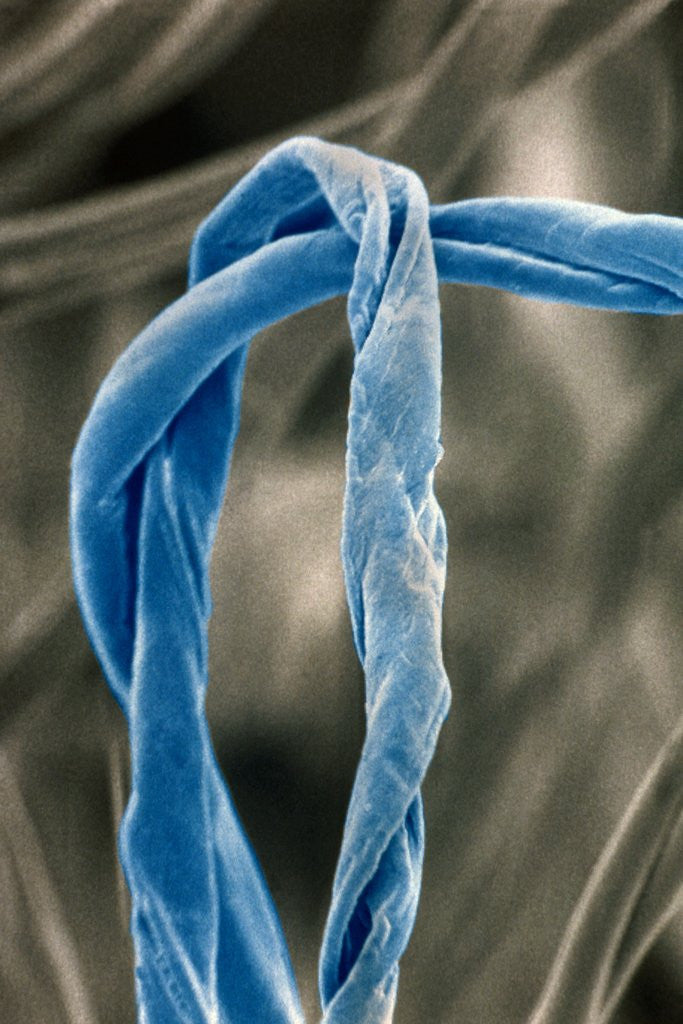 Detail of Cotton Fibers by Corbis
