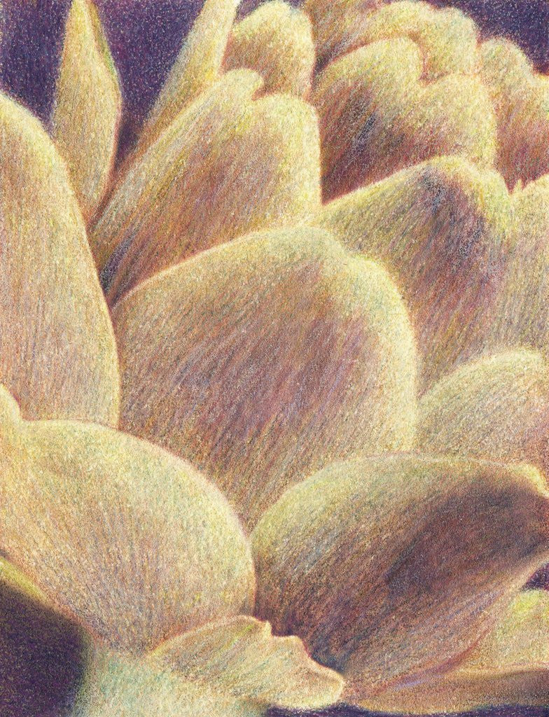 Detail of Artichoke by Jennifer Kennard