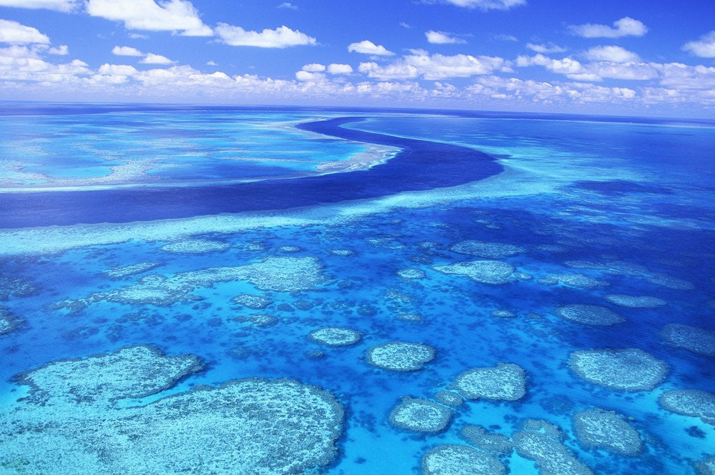 Detail of Australia's Great Barrier Reef by Corbis
