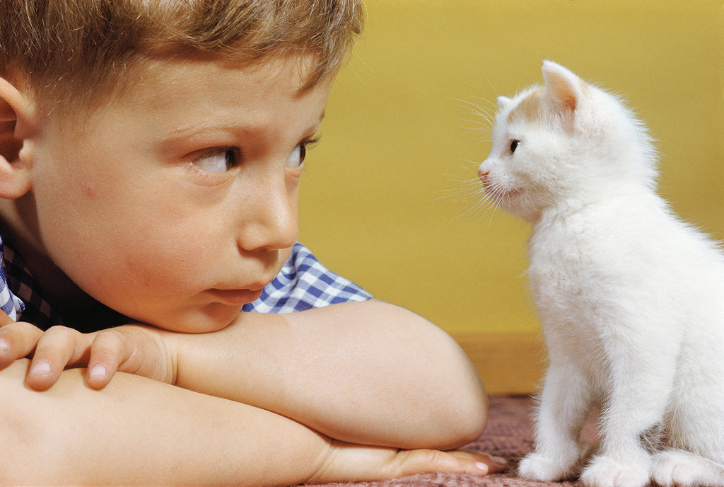 Detail of Boy Looking at White Kitten by Corbis