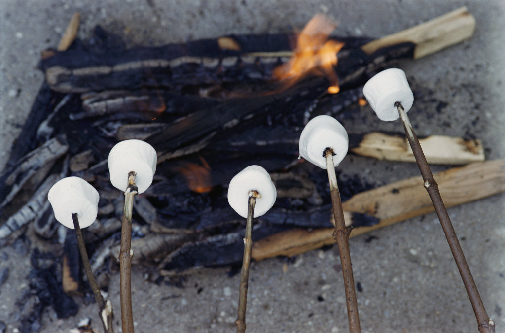 Detail of Cooking Marshmallows over Campfire by Corbis