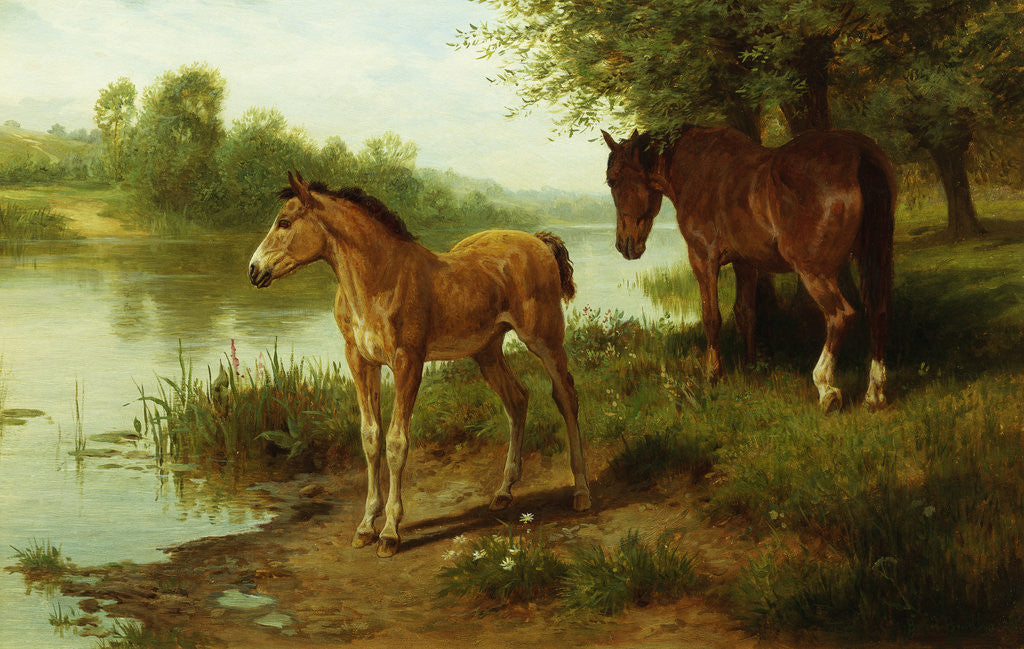 Detail of A Mare and Her Foal by Basil Bradley