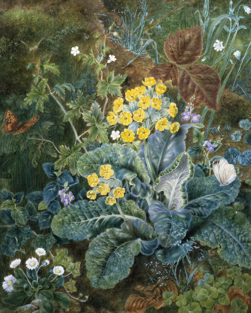Detail of A Still Life of Polyanthus and Butterfly by Mary Margetts