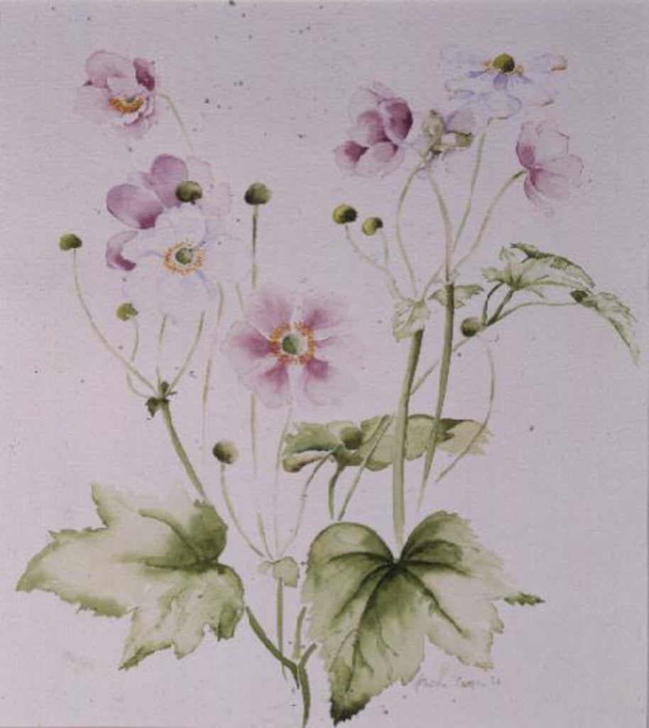 Detail of Hellebores by Alison Cooper