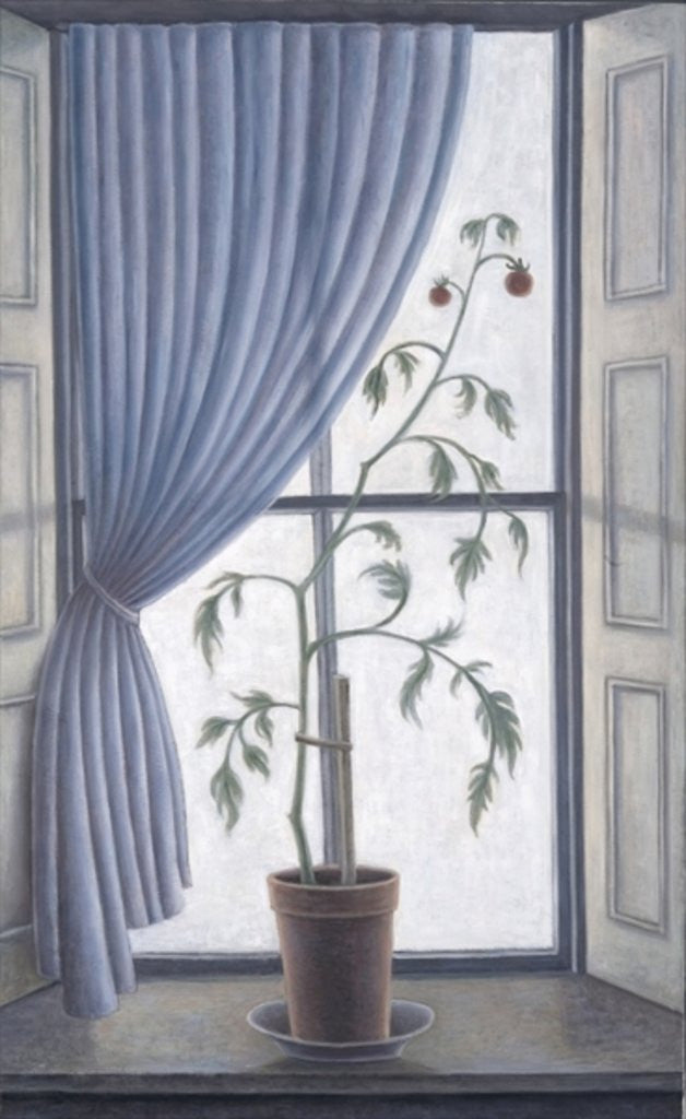 Detail of Plant in Window by Ruth Addinall