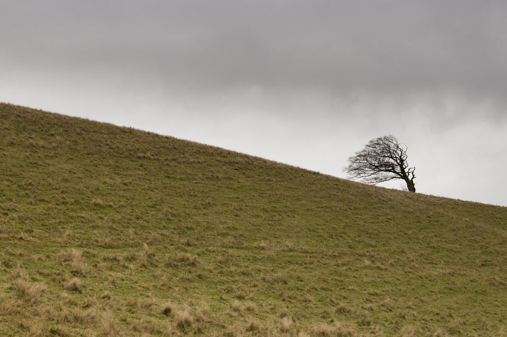 Detail of Tree against sky, Devon, UK by Assaf Frank