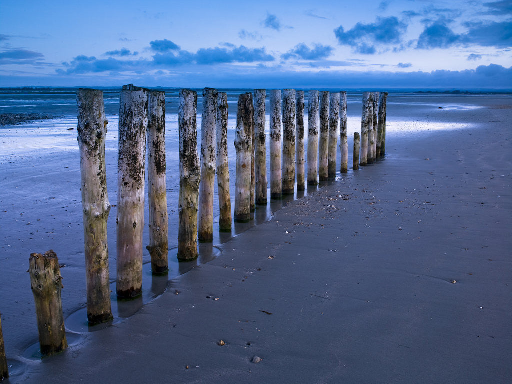 Detail of Groynes at ast head beach, West Susex coast by Assaf Frank