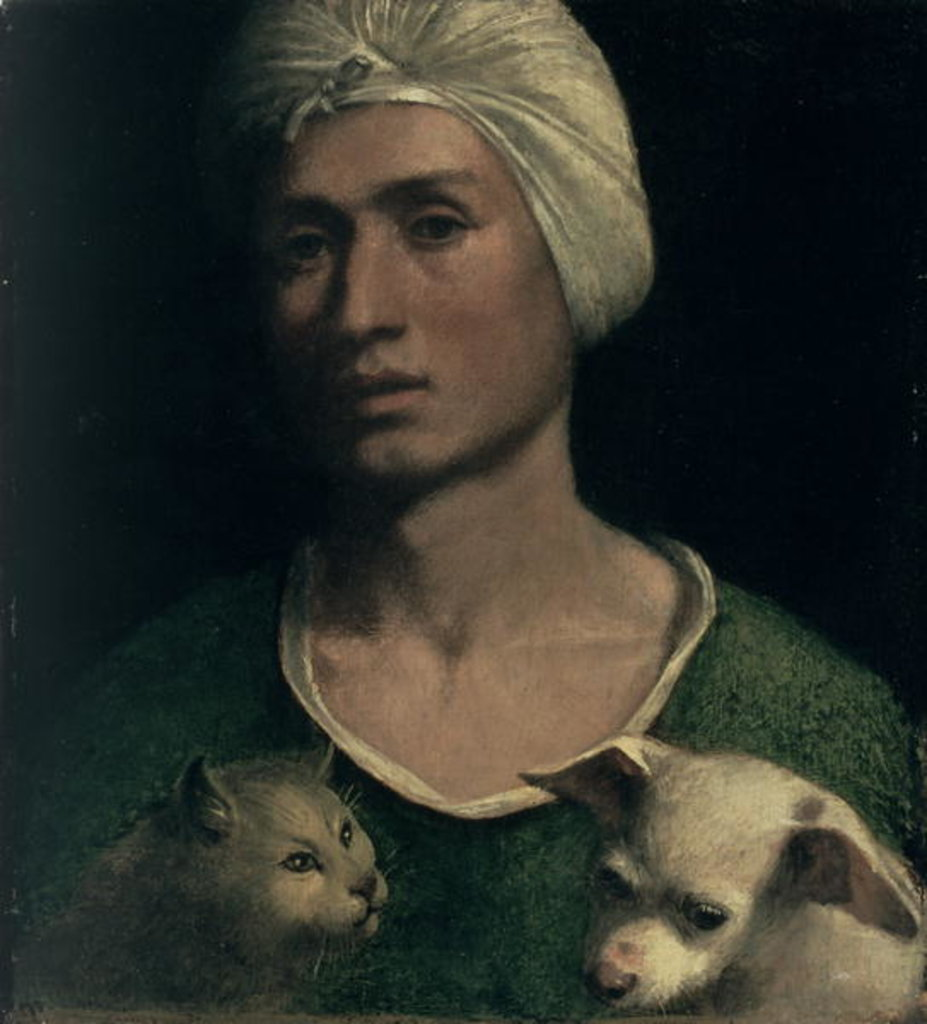 Detail of Portrait of a Young Man With a Dog and a Cat by Dosso Dossi