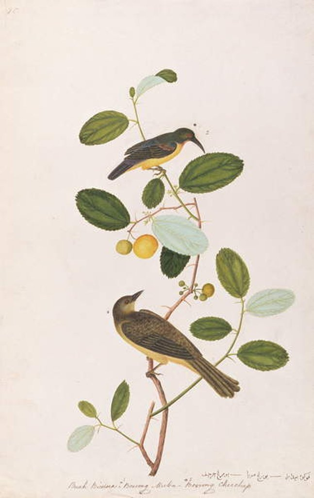 Detail of Red-throated Sunbird and Red-eyed Bulbul by Chinese School