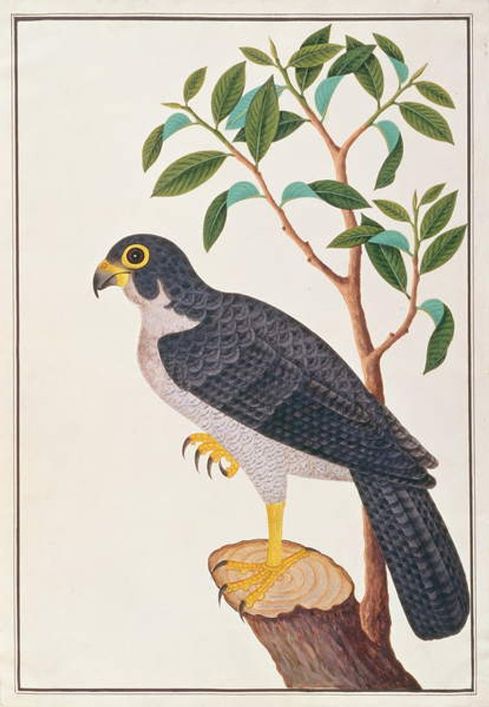 Detail of Peregrine Falcon by Chinese School