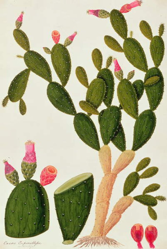 Detail of Liedah Badah, Cardasse Cochenille by Chinese School