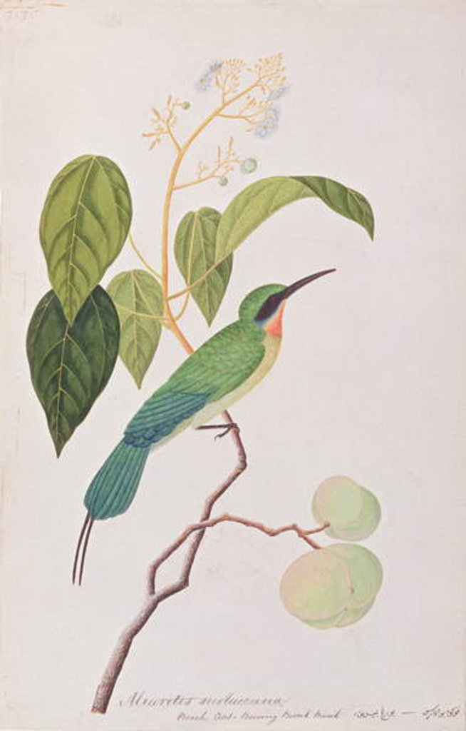Detail of Blue-tailed Bee-eater by Chinese School