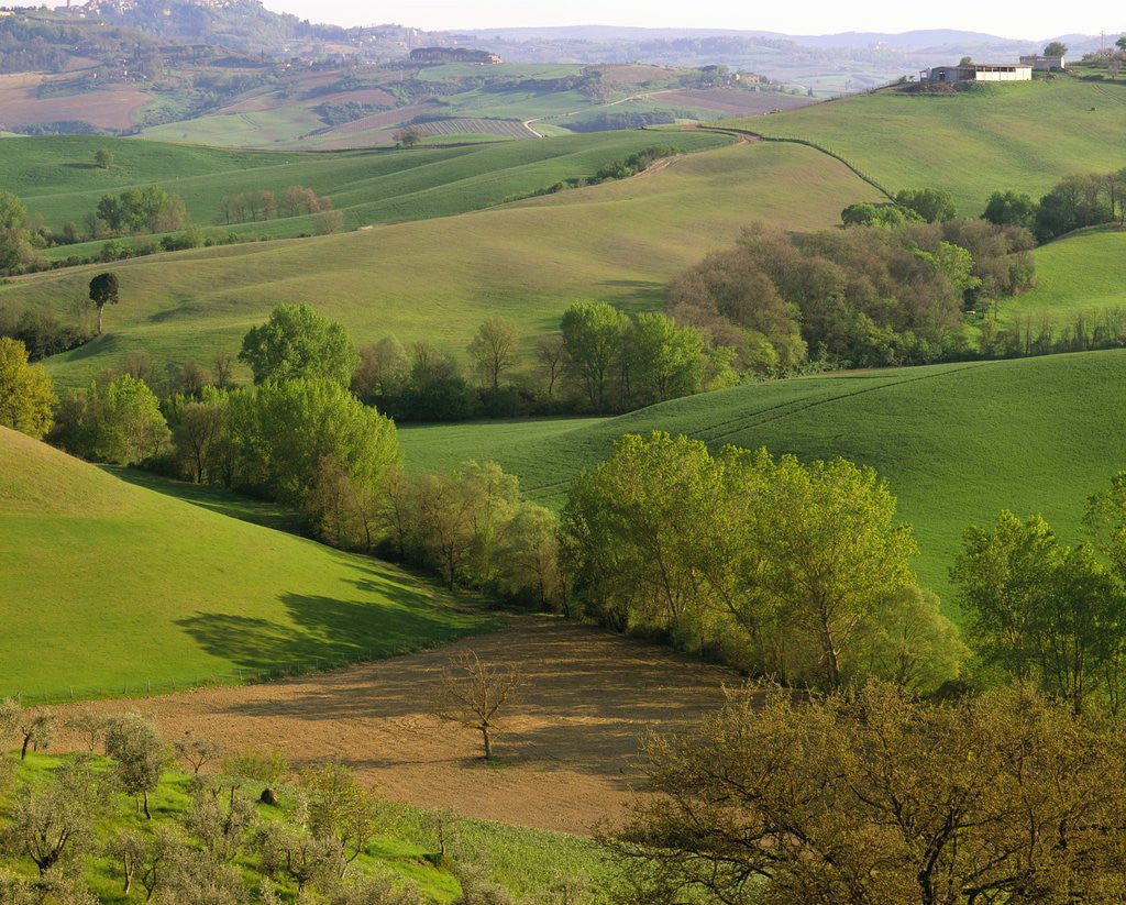 Detail of Countryside in Val d'Orcia by Corbis