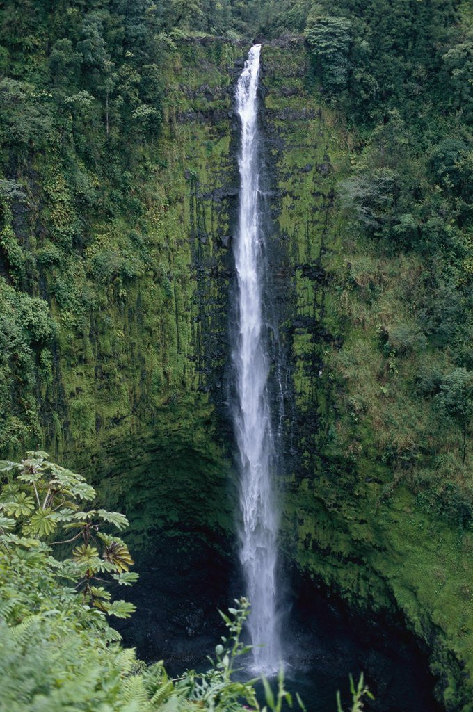 Detail of Akaka Falls by Corbis