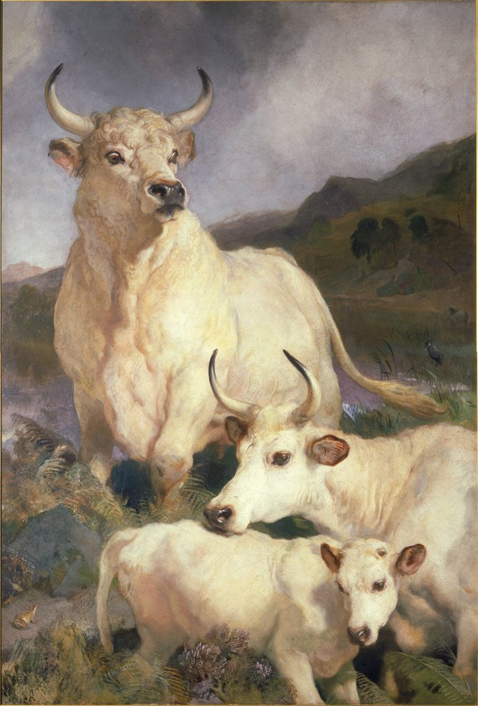 Detail of Wild Cattle of Chillingham by Sir Edwin Henry Landseer