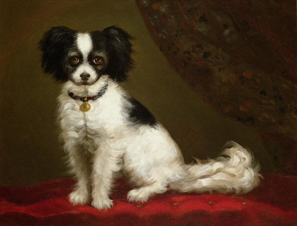 Detail of Portrait of a Spaniel by Anonymous
