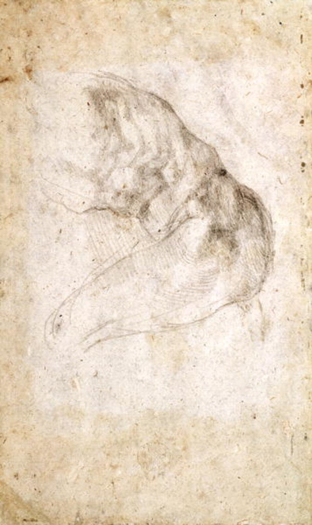 Detail of Study for The Creation of Adam (verso) by Michelangelo Buonarroti