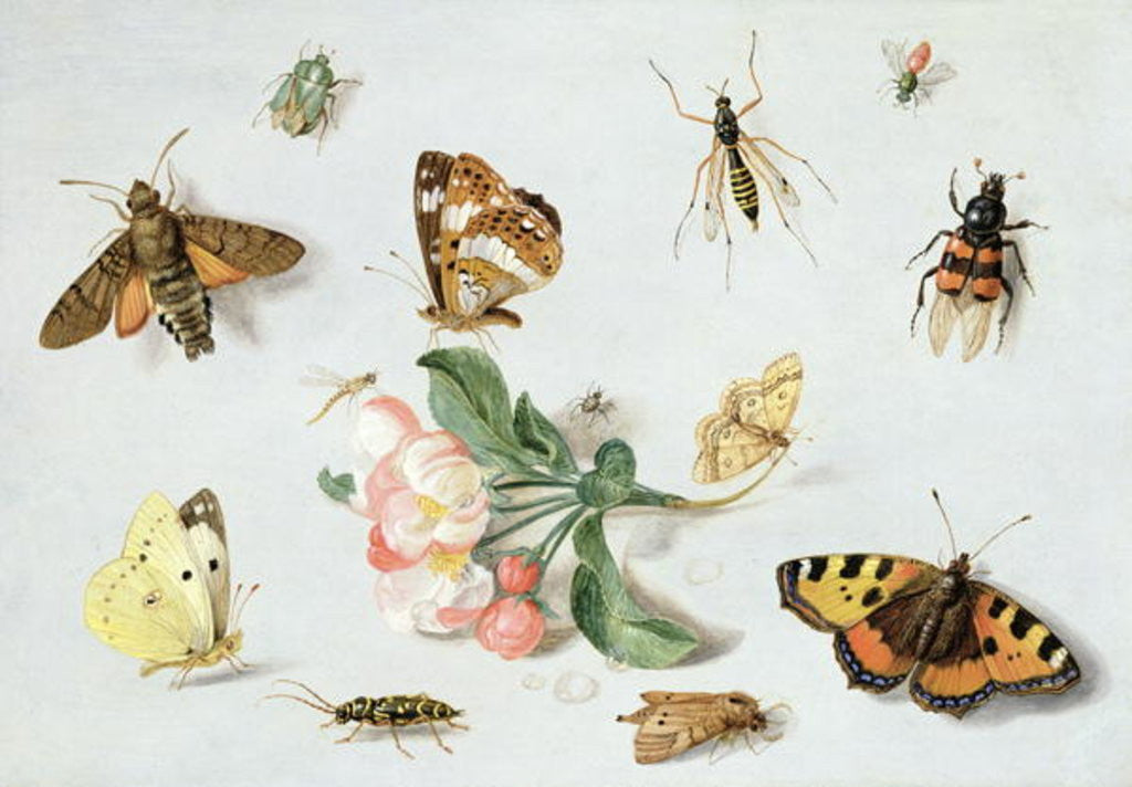 Detail of Butterflies, moths and other insects with a sprig of apple blossom by Jan van