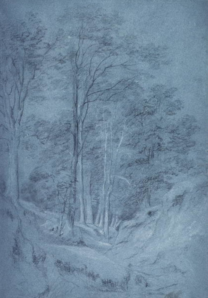 Detail of Study of ash and other trees by John Constable