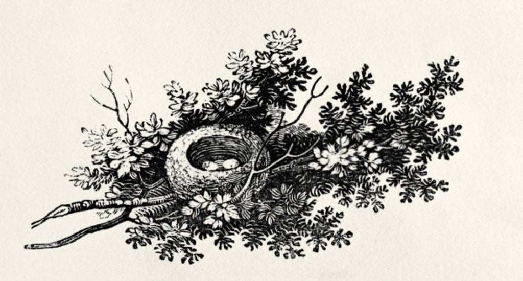 Detail of Bird's Nest by Thomas Bewick