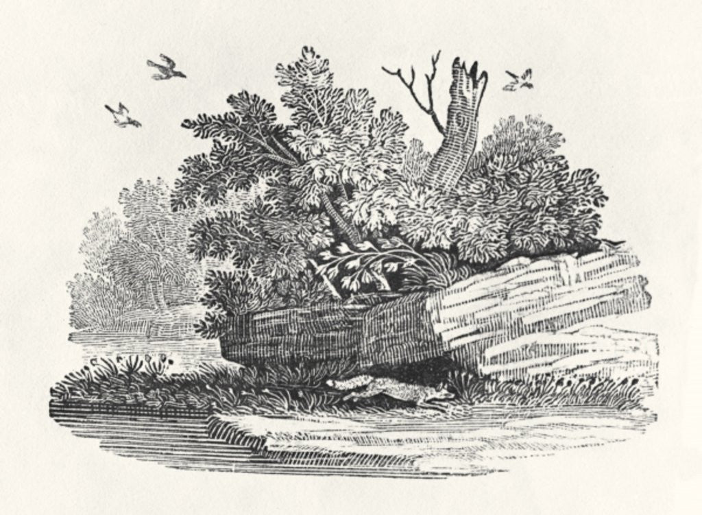 Detail of Fox escaping by Thomas Bewick