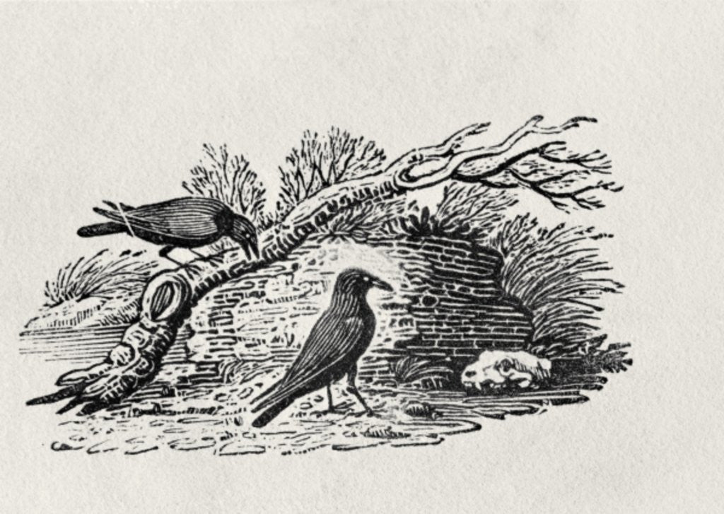 Detail of Crows (Corvus corone corone) by Thomas Bewick
