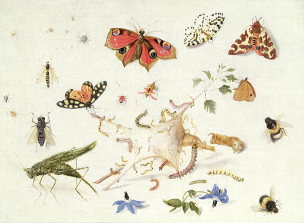 Detail of Study of Insects and Flowers by Ferdinand van Kessel
