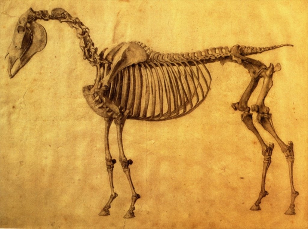 Detail of Finished Study for the First Skeletal Table of a Horse by George Stubbs