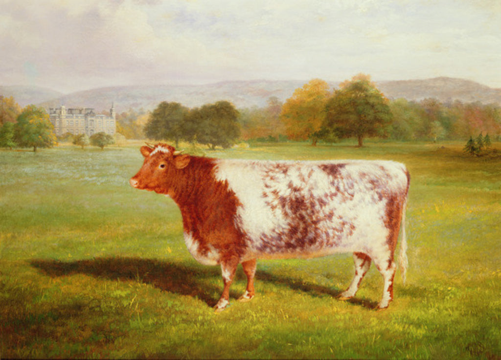 Detail of Portrait of a Shorthorn by William Joseph Shayer