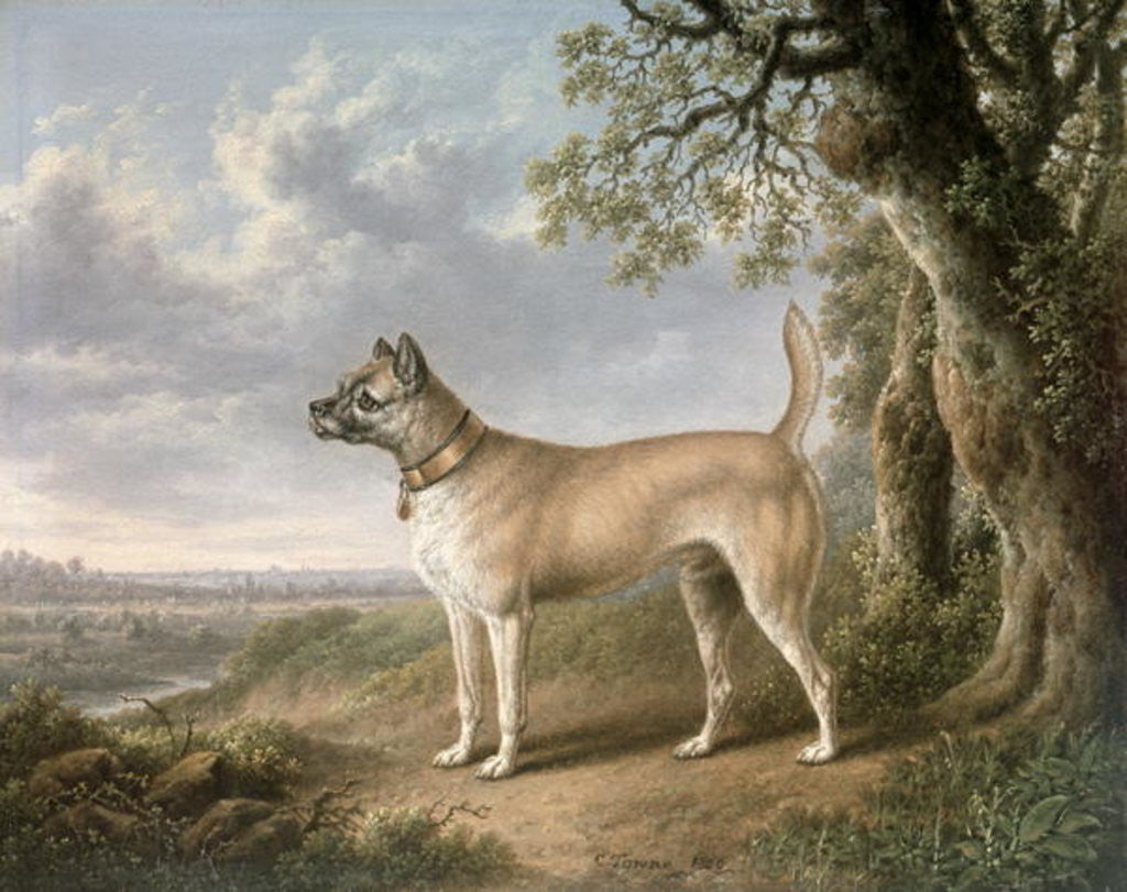 A Terrier on a path in a wooded landscape